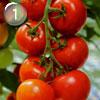 Правильное питание круглый год: ТОП-10 самых полезных продуктов