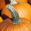 Меню на осень: едим тыкву, чтобы снять усталость и быстро похудеть