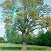 Открытие сезона 2010! ЭКОотель Coworth Park – лучший отдых в Великобритании