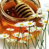 Мед и ромашка против зубных проблем