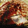 Загадки человеческого мозга, или Почему нас подводит память?