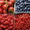 Птичий рацион: Чем полезны ягоды, собранные летом
