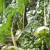 Бесполезная зелень от овощей: какой прок может быть от ботвы?