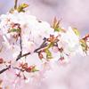 Пыльца может не вызывать аллергию, а лечить!