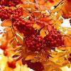 Осенняя косметика: 7 масок для кожи лица из рябины