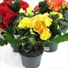 Топ-10 полезных комнатных растений. Какие растения выращивать дома?