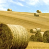 Терапия сеном в Италии, или Как устроить необычную spa-процедуру дома?