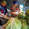 Вся правда о квашеной капусте: Как квасить, есть и лечиться