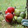 Дачникам посвящается: Урожайные зарисовки