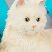 «Тук-тук, это я, электронная кошка-компаньон!» Об игрушке для пожилых