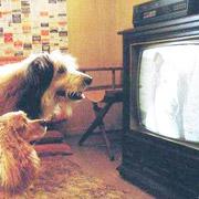 Зачем проводят кинофестивали для собак и кошек?