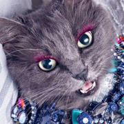 Гламурная Кошка – оп, ресницами хлоп