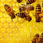 Мёд. Как определить подделку мёда?