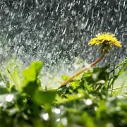 Почему у дождя есть запах?