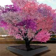 Чудо фруктовое в Нью-Йорке: 40 видов плодов и все на одном дереве