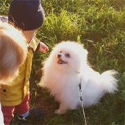 Собака как помощник в профилактики при шизофрении