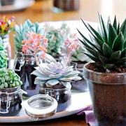 Домашние растения, которые можно оставить без полива на долго