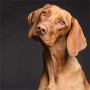 10 поразительных фактов о собачьем мышлении