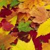 Очей очарованье: 7 здоровых причин любить осень